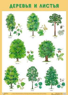 Картинки по запросу деревья плакат